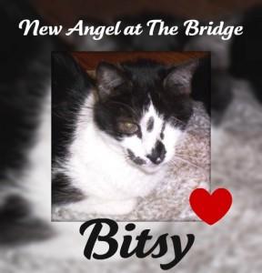 Bitsy memorial