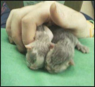 Tulip's kittens