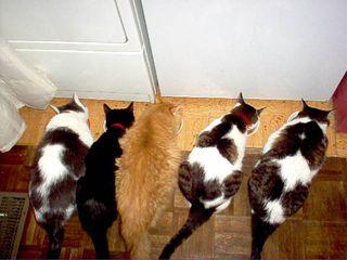 Random felines butterscotch