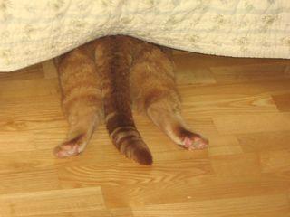 Candace's jasper (hiding)