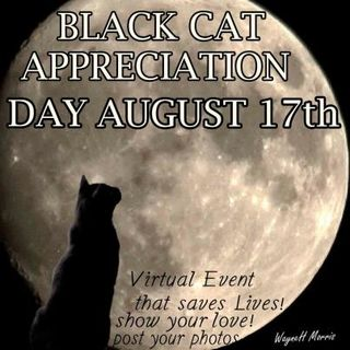 Black cat day moon