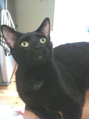 Kip for black cat day