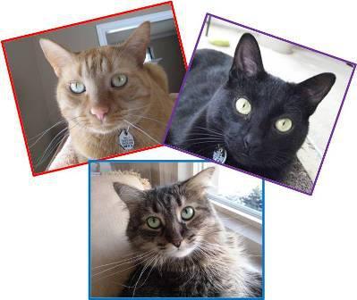 Theislandcats