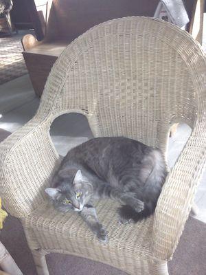 Elfin in favorite chair