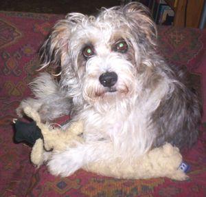 Benji w toy4