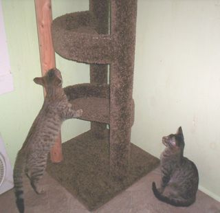 Cat tree toast and slate
