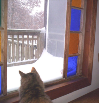 Amelia watches it snow