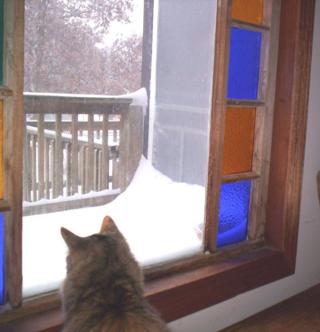 Amelia watches it snow