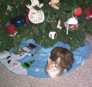 Amelia under the tree