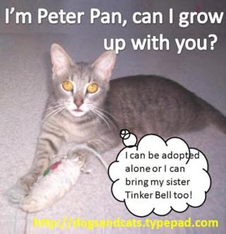 Andrea peter pan