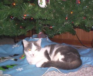 Jazzy under tree