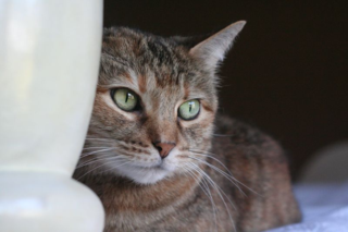 Colehauscats