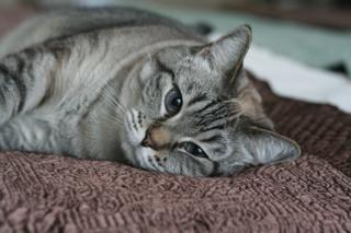 Colehauscats3