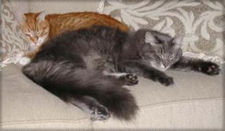 Colehauscats4
