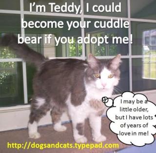Andrea teddy