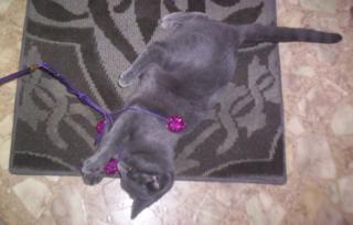 Evers camo kitty2