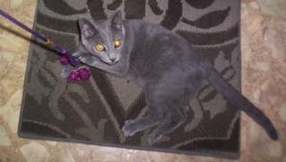 Evers camo kitty4