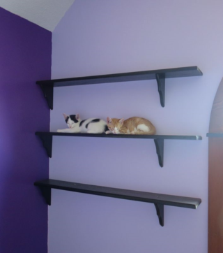 Kitty shelf