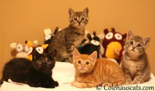 Colehauscats1
