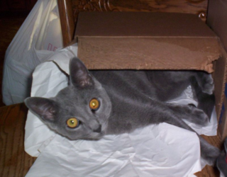 Evers in the box2