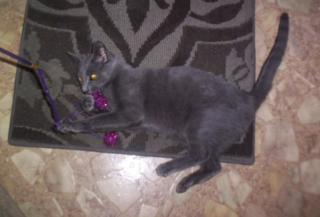 Evers camo kitty3