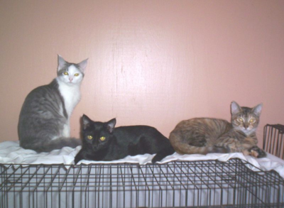 Snowflake, june bug, sienna