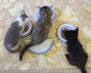 Three fosters2
