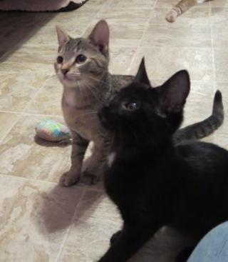 PH kittens2