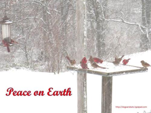 Peace on earth9