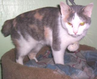 Matilda for petfinder