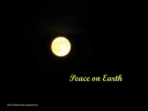 Peace on earth6