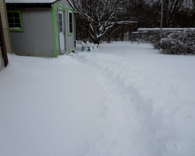 Path to the cathouse