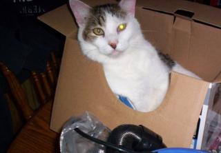 Suds in a box