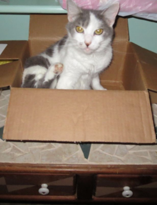 Jazzy in a box