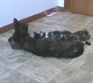 Mom and kittens2
