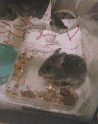 Mouse9b