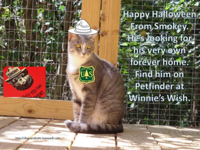 Halloween adoption - smokey