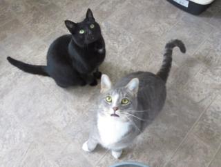 Cato and smokey