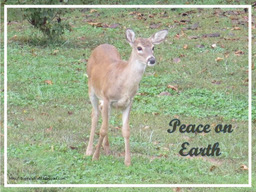 Peace on earth8