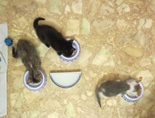 Three fosters