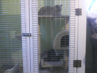 Pan and tink in enclosure