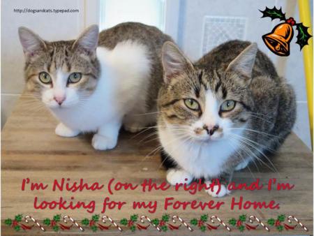 Christmas nisha
