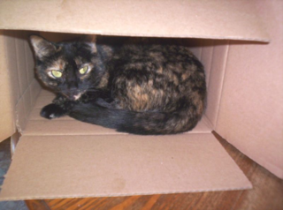Analeigh in the box