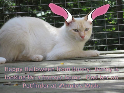 Halloween adoption - bunny