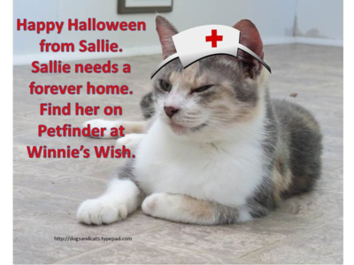 Halloween adoption - sallie