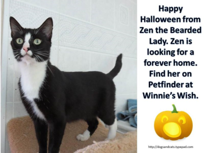 Halloween adoption - zen