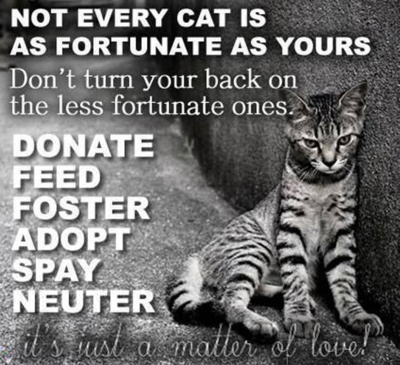 Not every cat is fortunate