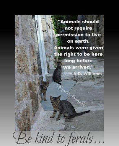 Be kind to ferals