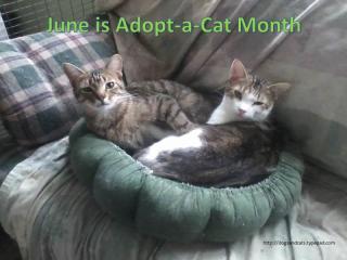 June adopt a cat