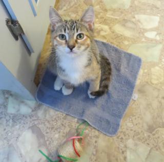 Carmel in my bathroom